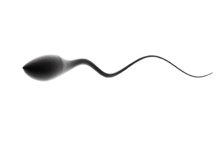 production of sperm / photo from http://galtime.com